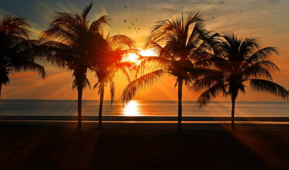 Picture of palm trees for article banner
